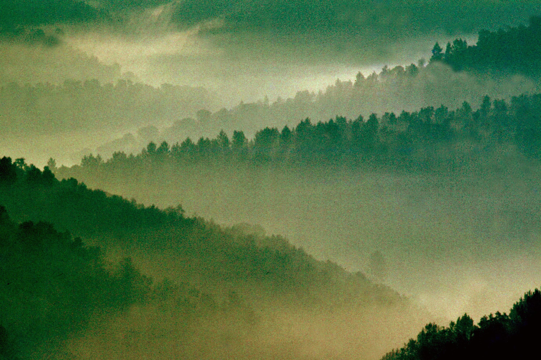 Imatge artística de les diferents vessants de les muntanyes i la boira. On les valls queden difuminades i només es veuen els perfils dels arbres de la part alta de les vessants.
