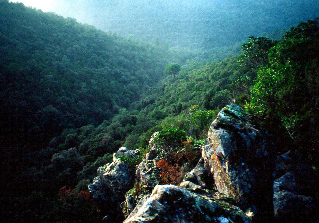 Imatge artística de la roquera d'en Mercader. Enmig del verd dels boscos de les Gavarres i jugant amb la llum veiem ressaltat el conjunt lític de les roqueres d'en Mercader. Des de la roquera estant se'ns obra la vall de la Riera del Mas Matas.