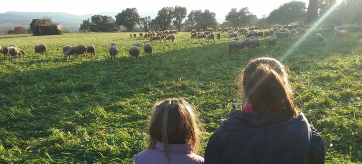 Camp pastat per ovelles