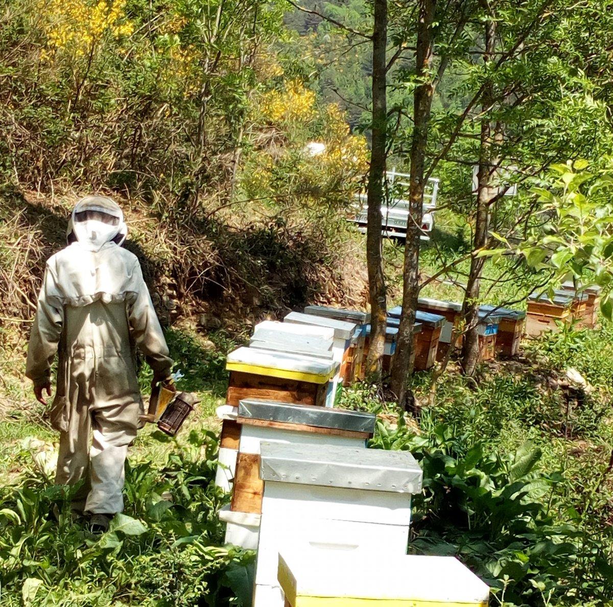 Apicultors i caixes d'abelles