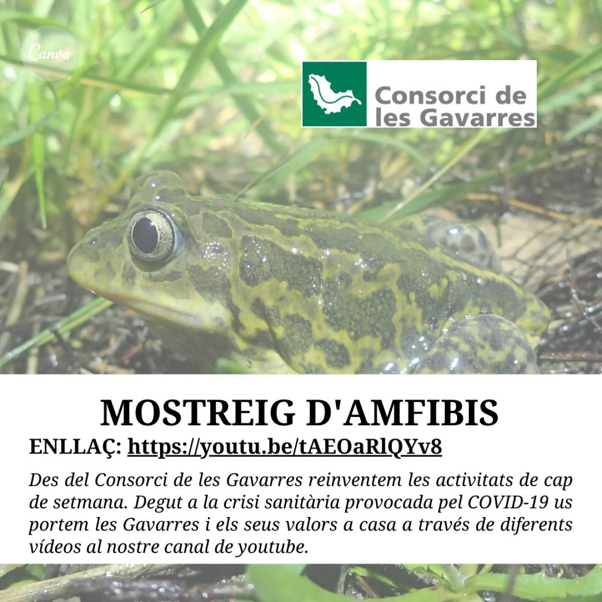 Cartell Mostreig d'amfibis