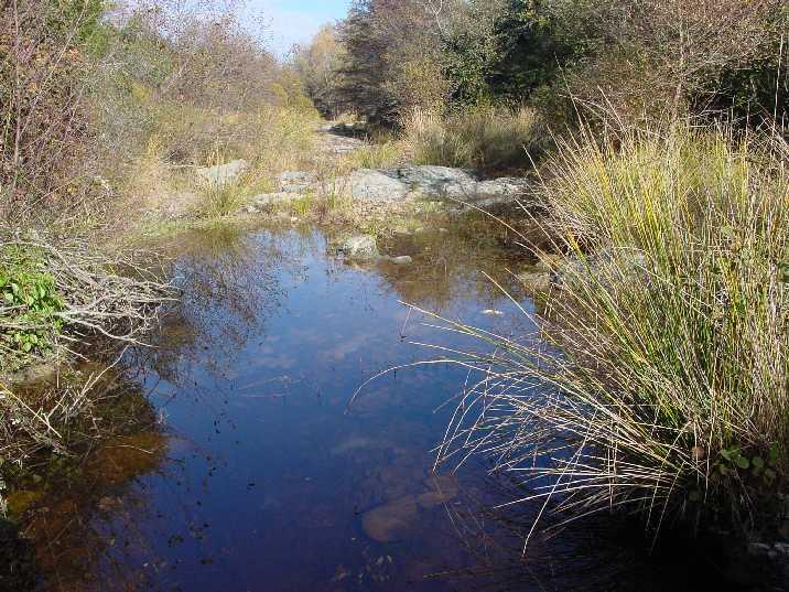 Fotografia d'àmbient fluvial. El Daró al seu pas pel pla de Salelles dibuixa petites gorgues reservoris per la fauna en les èpoques d'estiatge. Joncs i salzes emmarquen el Daró a Cruïlles, Monells i Sant Sadurní de l'Heura.
