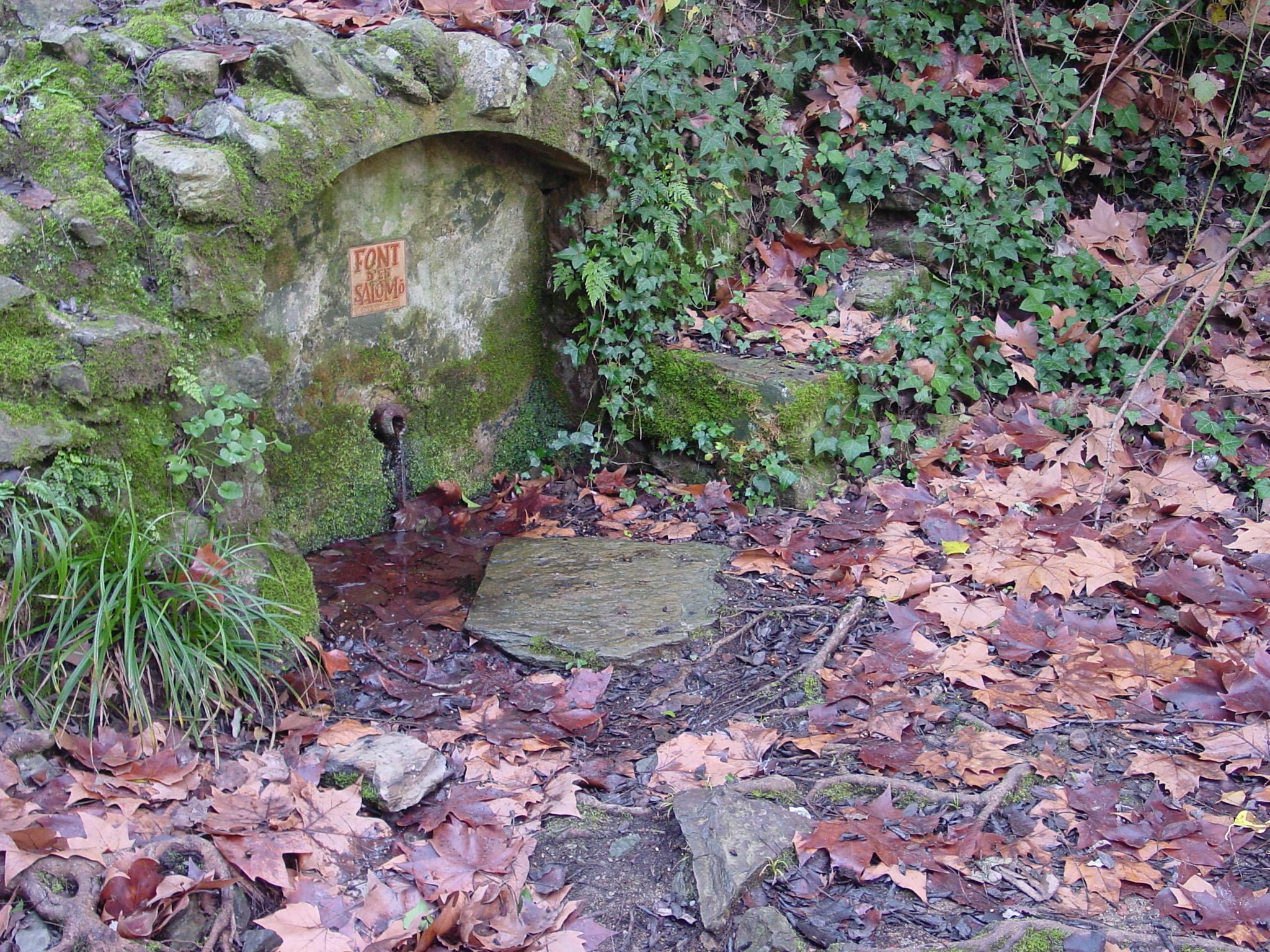 La font d'en Salomó és una de les més actives de les Gavarres. Antigament era un lloc de trobades i berenades entre els veïns de La Bisbal. La imatge transmet l'àmbient humit de la font amb les fulles de plataners al terra i el verdet de les pedres. La família Salomó fou una de les famíies benestants del municipi.