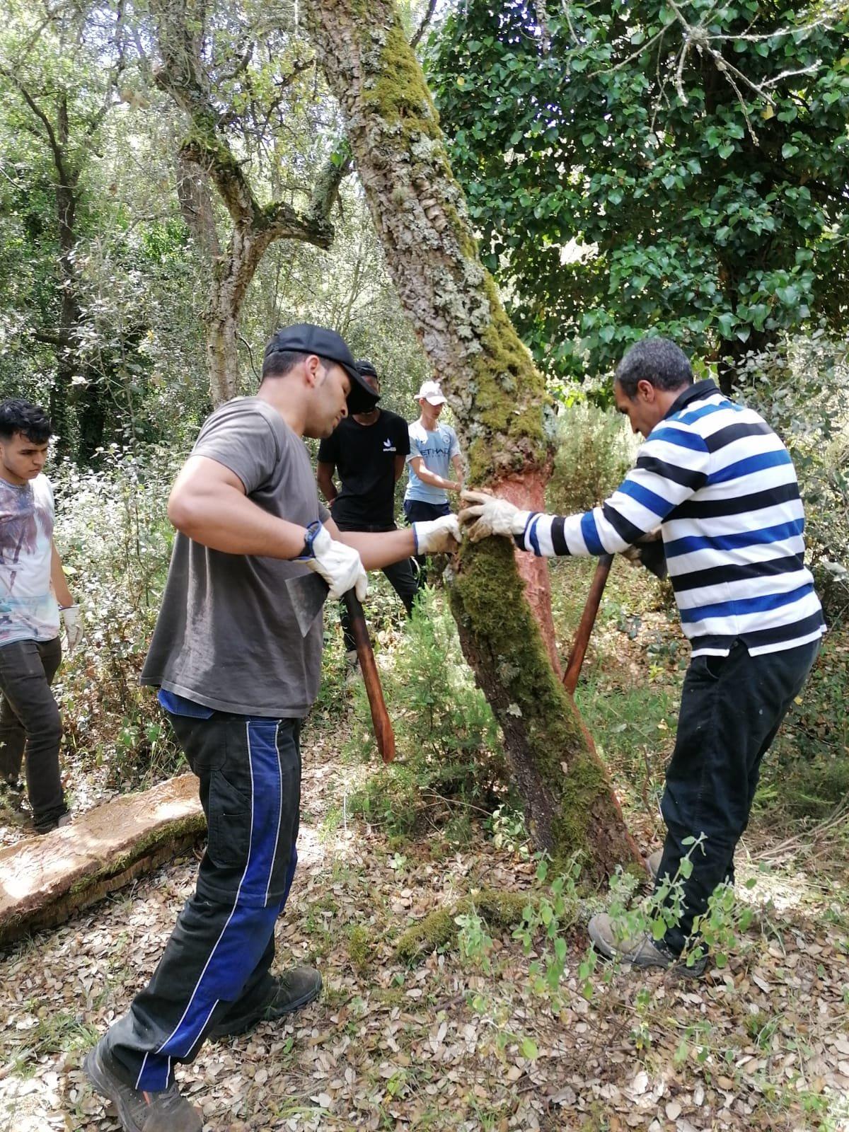 Can Vilallonga acull el curs de pelador de suro organitzat per l'Escola Agrària Forestal
