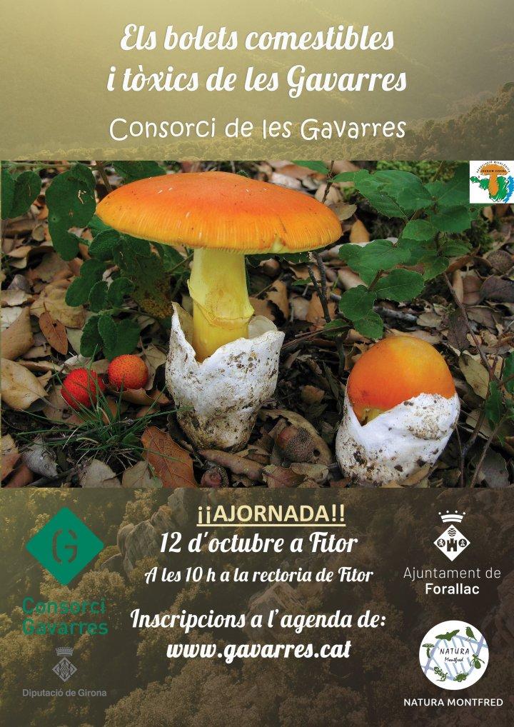 Cartell de l'activitat els bolets comestibles i tòxics de les Gavarres