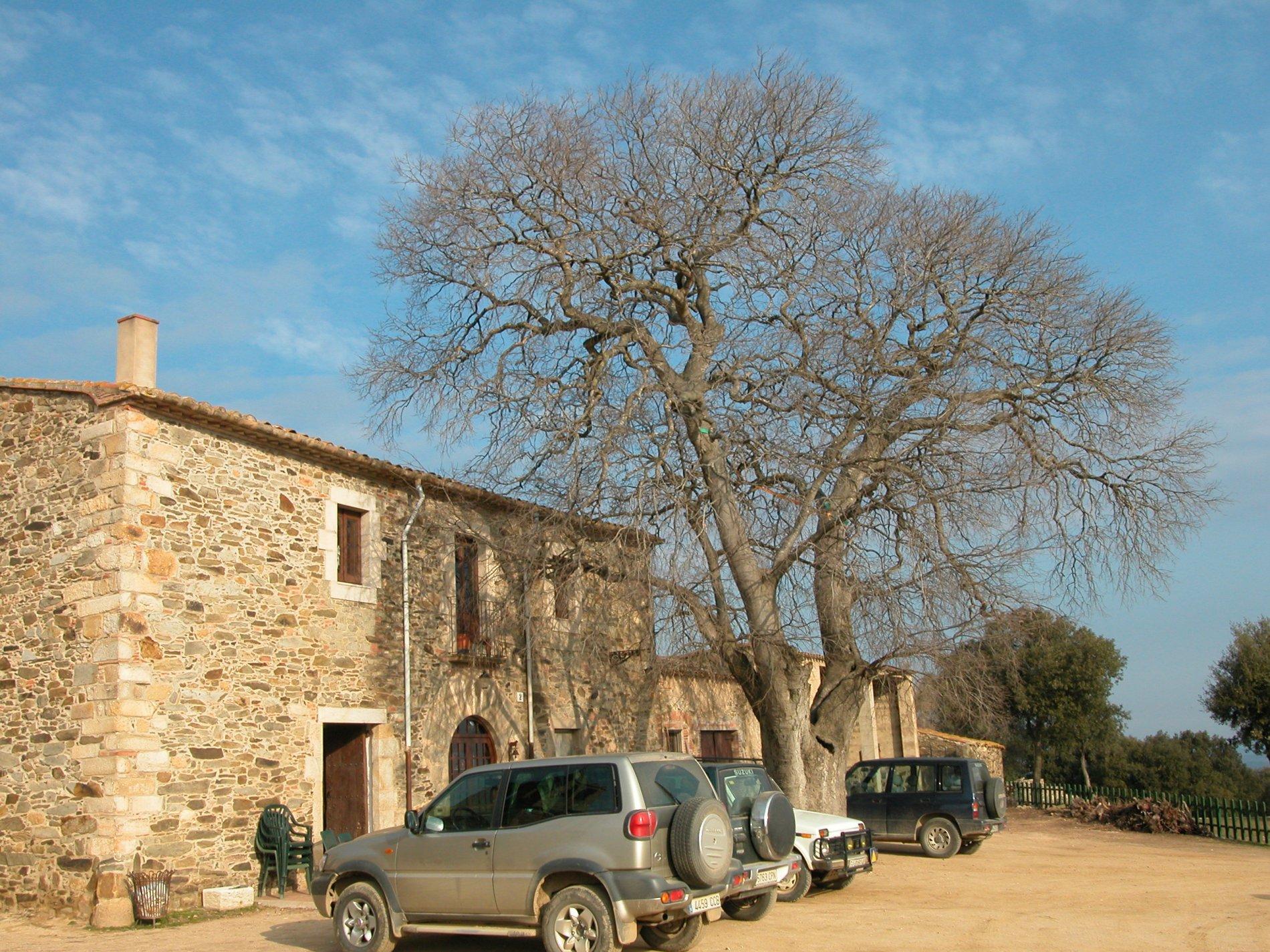 Lledoner dels Metges (Can Cama). 2005. Cruïlles, Monells i Sant Sadurní de l'Heura