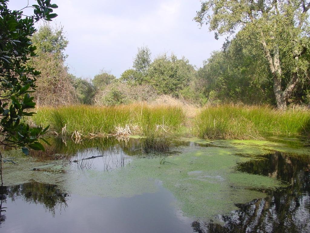 Antiga bassa de rec per l'hort del mas. El seu abandó ha provocat que els sediments s'hi acomulessin i esdevingui el lloc idoni per plantes i animals aquàtics com les granotes. Tampoc és estrany que aus com els ànecs l'aprofitin.